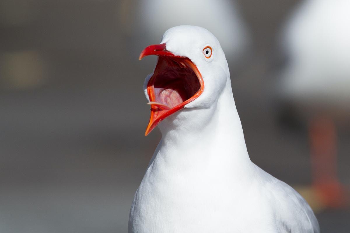 Shocked seagull
